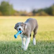 Kong Puppy Goodie Os  - Jouet pour Chiots
